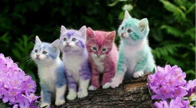 Cat Colours