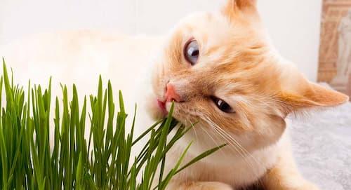 does catnip calm cats