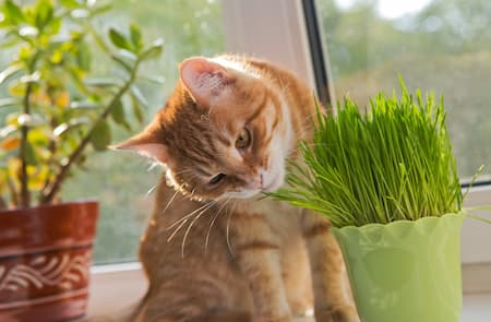 fresh catnip plant for cats