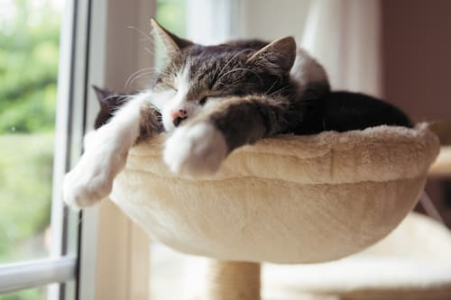 how much do cats sleep in their life