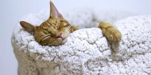 how much do cats sleep in winter