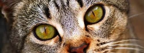 what colors can cats see best
