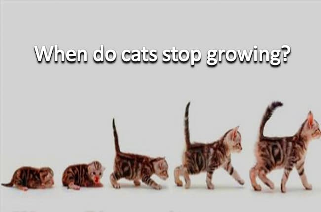when do cats stop growing