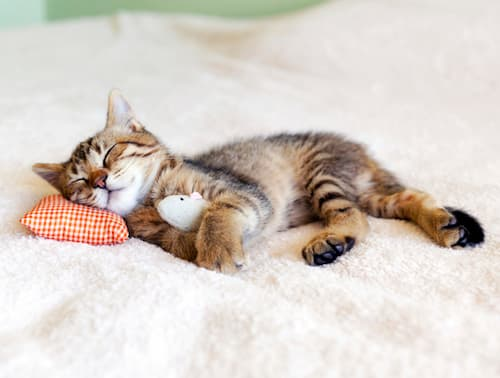 why do cats sleep so much in winter
