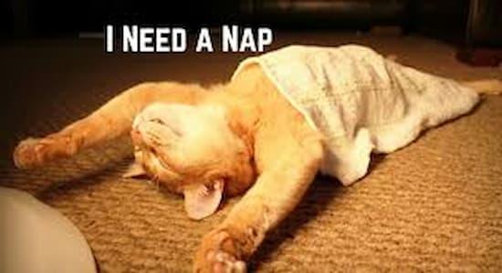 why do cats need so much sleep