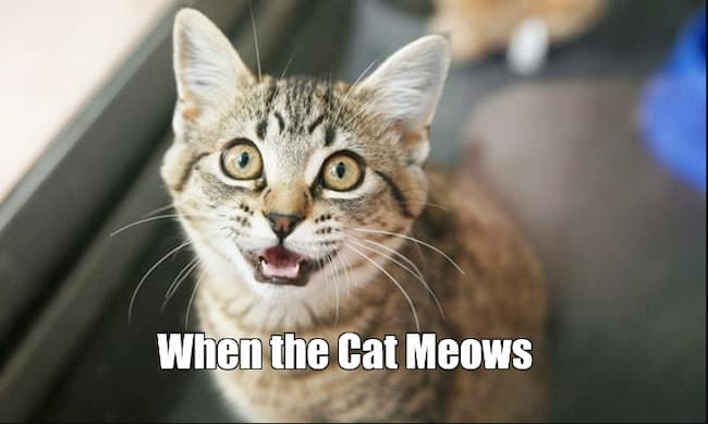 When the Cat Meows