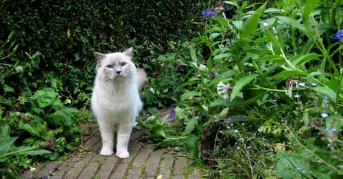 how to get rid of cats in your yard