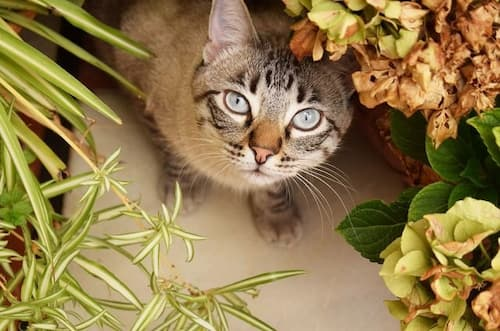 how to get rid of neighbors cats in my yard
